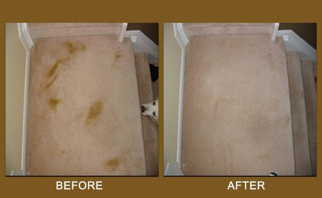 pet-stain-carpet