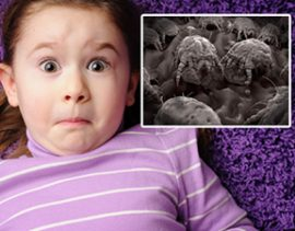 How Many Dust Mites Are In Your Home?